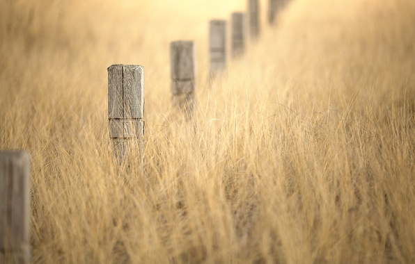 Picture grass, posts, bokeh, winter gold
