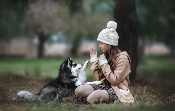 Picture autumn, animal, the game, dog, girl, puppy, coat, child, cap, husky, teen