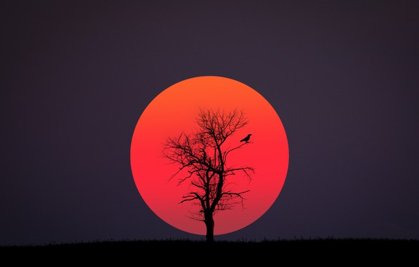 Photo wallpaper red, black, bird, sun