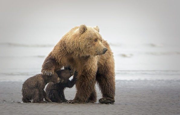 Picture bears, bears, bears, bear