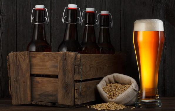 Picture foam, glass, beer, bottle, box, grain