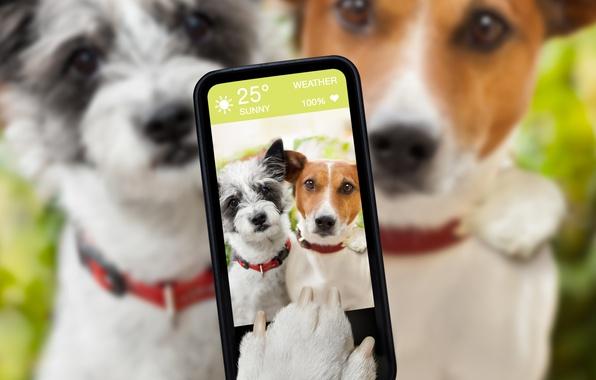 Picture dogs, humor, blur, smartphone, selfie