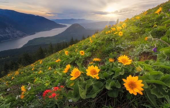 Picture flowers, mountains, river, slope, Washington, Columbia River, Columbia River Gorge, The cascade mountains, Washington State, …