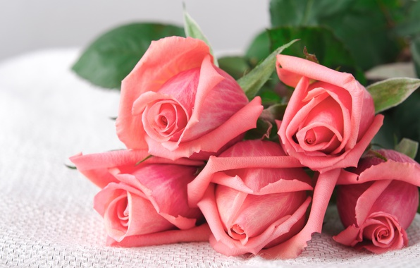 Picture roses, bouquet, love, buds, pink, flowers, romantic, roses