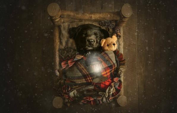 Picture mood, toy, sleep, baby, flashlight, bear, doggie, Teddy bear, cot, sleeping puppy