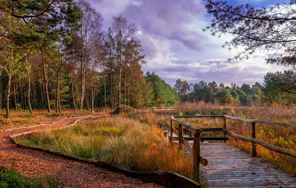 Picture autumn, forest, grass, leaves, clouds, trees, Park, Germany, track, river, bridges, Saxony, Kirchwalsede
