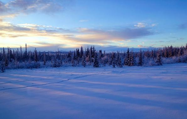 Picture winter, snow, trees, Alaska