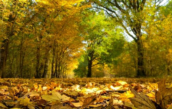 Picture Autumn, Trees, Fall, Foliage, Autumn, Trees, Leaves