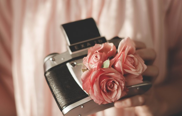 Picture The camera, Roses, Roses, Hi-Tech