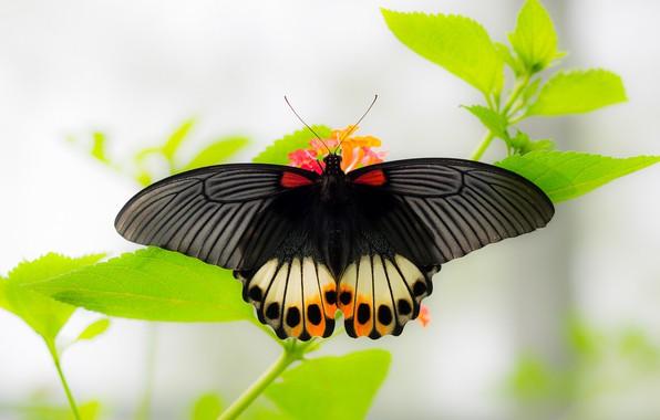 Picture macro, butterfly, bokeh