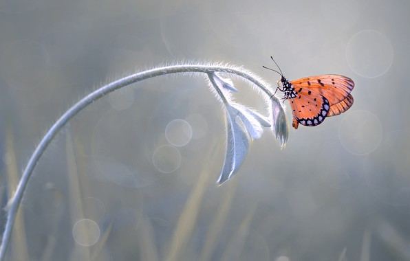 Picture macro, butterfly, plant, branch