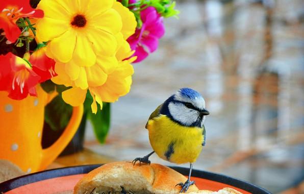 Picture Bird, Flowers, Flowers, Bird