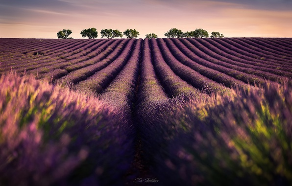 Photo wallpaper field, the sky, trees, flowers, lavender