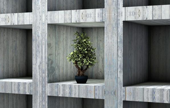 Picture bonsai, plant, interior, shelf, rack