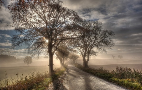 Picture Road, Fog, Morning