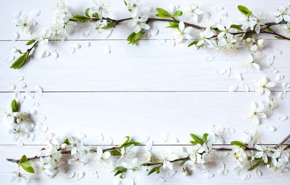 Picture flowers, background, spring, Apple, wood, blossom, flowers, spring, frame