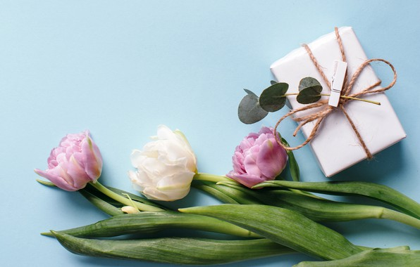 Picture flowers, gift, tulips, white, fresh, pink, flowers, beautiful, tulips, gift, spring, tender