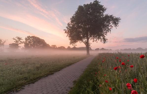 Picture fog, Maki, morning
