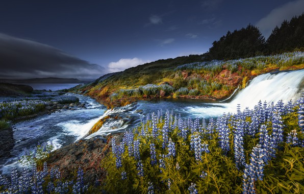 Picture flowers, waterfall, cascade, Iceland, lupins