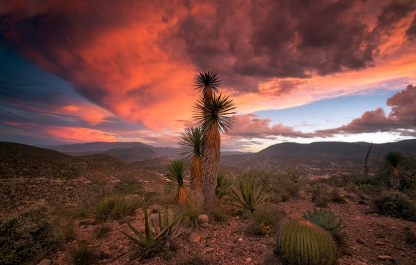 Picture clouds, nature, palm trees, rocks, cacti