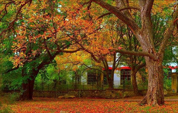 Picture Autumn, Trees, Fall, Foliage, Autumn, Colors, Leaves