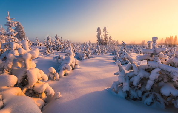 Picture winter, forest, snow, Finland