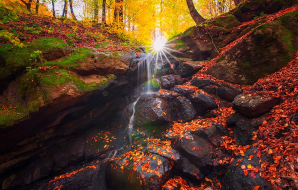 Picture autumn, forest, leaves, the sun, rays, trees, nature, stream, stones