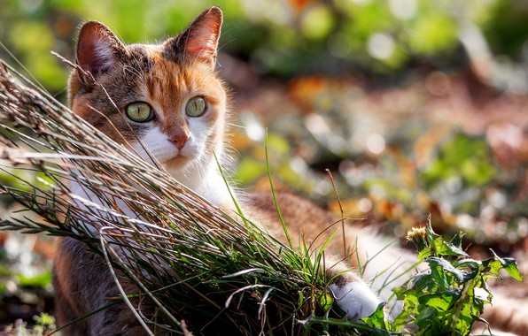 Picture cat, summer, grass, eyes, look