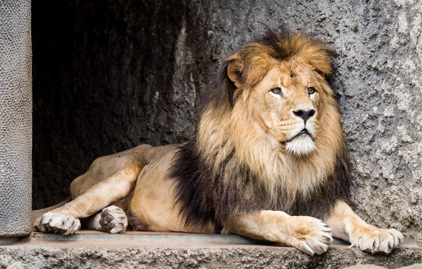 Picture Leo, beast, zoo