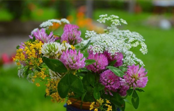 Picture Flowers, Spring, clover, Flowers