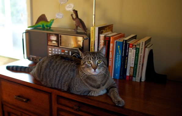 Picture cat, cat, look, comfort, table, grey, wall, toys, furniture, books, paws, window, lies, dinosaurs, wardrobe, …