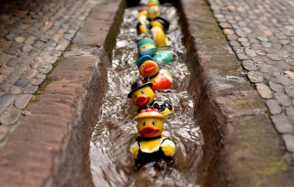 Picture colours, rubber duck race, bunt