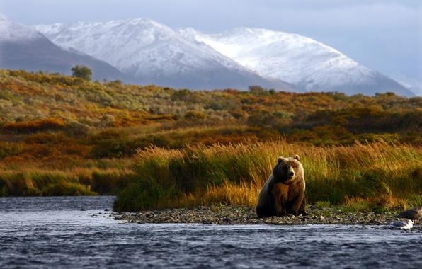 Picture summer, mountains, nature, river, blur, bear, hunting, bear, animals, nature, brown, bokeh, brown, travel, wallpaper., …