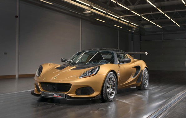 Picture Lotus, Cup, Elise, 2017, 260
