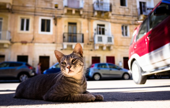 Picture cat, street, yard