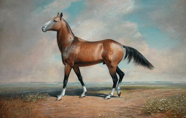 Picture the steppe, desert, horse, 2008, Aibek Begalin, Gauhar
