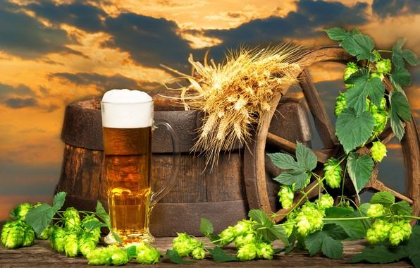 Picture the sky, foam, clouds, landscape, sunset, glass, background, beer, wheel, ears, barrel, hops