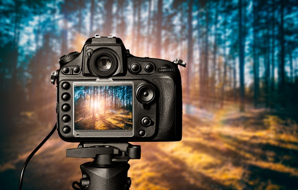 Picture light, forest, Camera