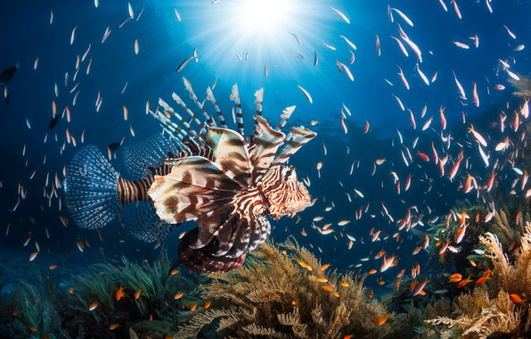 Picture sea, the sun, light, fish, the ocean, fish, under water, fish lion