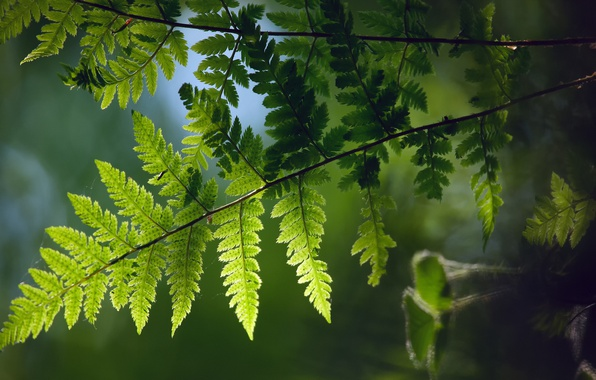 Picture macro, branch, spring, fern, Furness