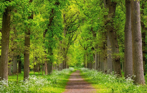Picture greens, trees, landscape, nature, beauty, spring, joraga