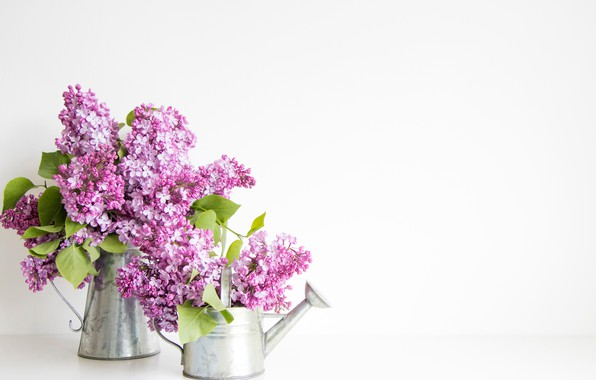 Picture white background, lake, lilac