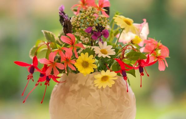 Picture chamomile, vase, lavender, fuchsia, pelargonium, summer bouquet, Erysimum