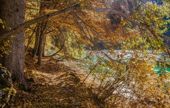 Picture autumn, trees, lake, Italy, Trentino Alto Adige, Lago di Tovel, The Adamello Brenta Park