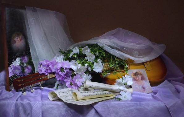 Picture girl, flowers, notes, guitar, portrait, veil