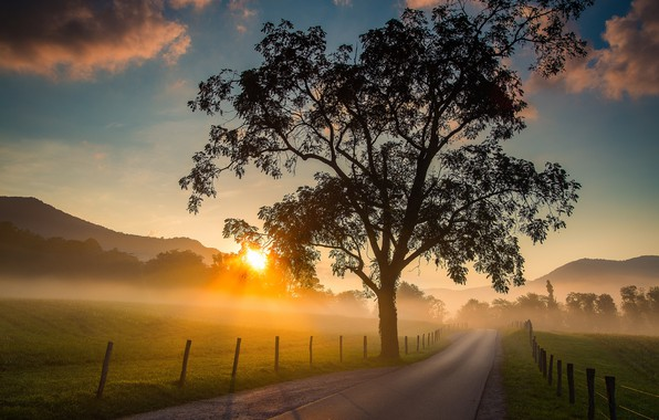 Picture road, sunrise, tree, dawn, field, morning, Tennessee, Cades Cove, Tn, Great Smoky Mountains National Park, …