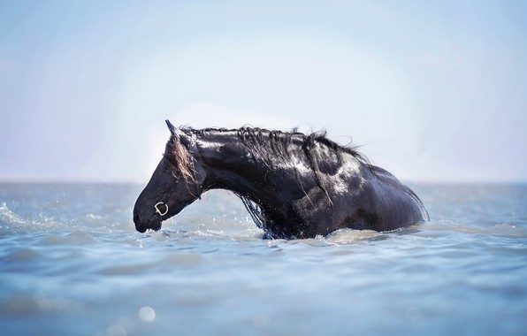 Picture water, horse, horse, bathing, water treatment