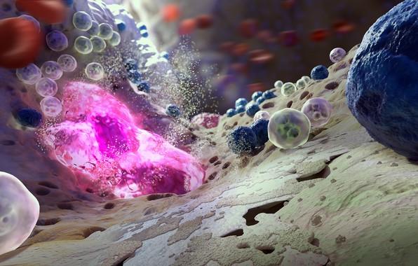 Picture colors, macro, bones, science, biology, bacteria, microscope, marrow, Viruses