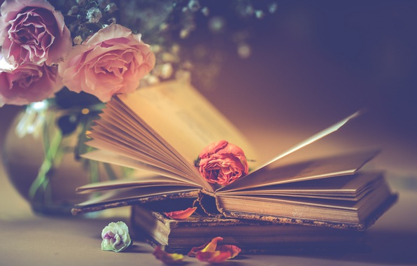 Picture flowers, style, books, roses, bouquet, petals, Bud