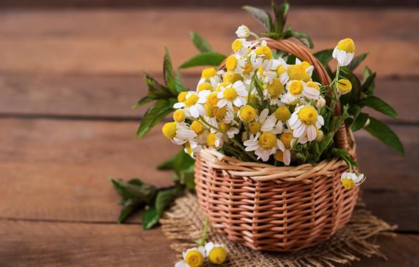 Picture flowers, basket, bouquet, Daisy, mint